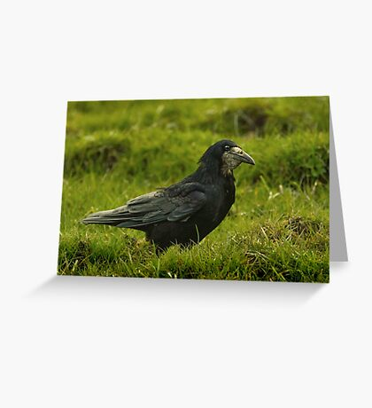 Rook Look Greeting Card