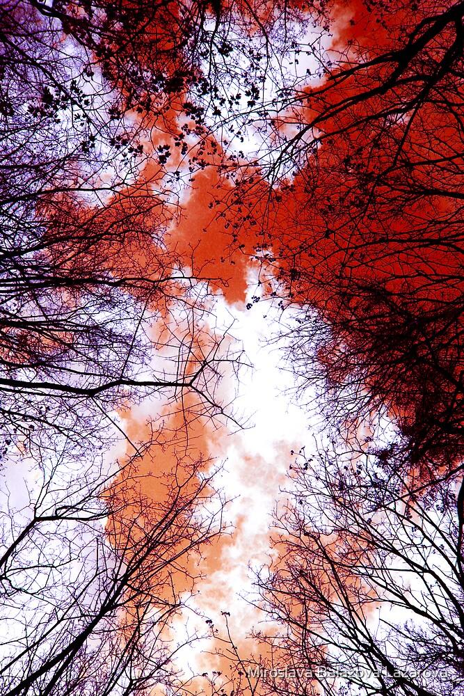 look up by Miroslava Balazova Lazarova