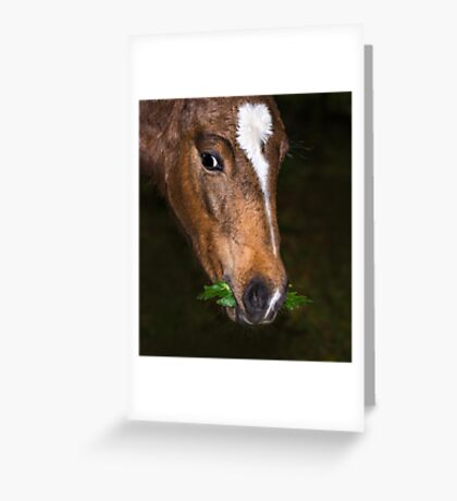 Foal and Leaves Greeting Card