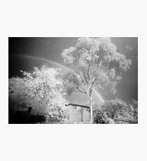 The Midnight Tree Photographic Print