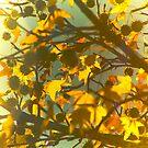 yellow autumns by Amagoia  Akarregi