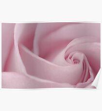 Soft Pink Rose Macro  Poster