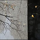 ephemeral by Nikolay Semyonov