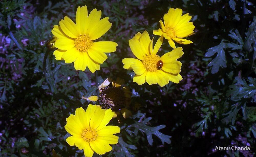 Flower - 08 by Atanu Chanda