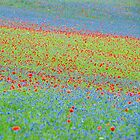 Explosion of flowers in Castelluccio by Luciano Fortini