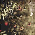 Ballard Flowers by Marcia Glover