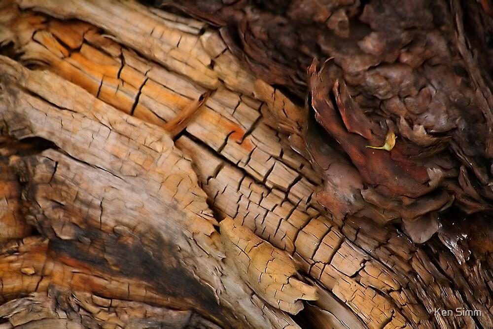 Bog Oak 4 by Kenart