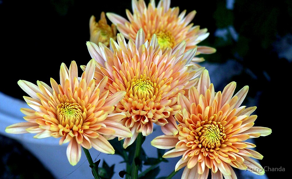Flower - 33 by Atanu Chanda