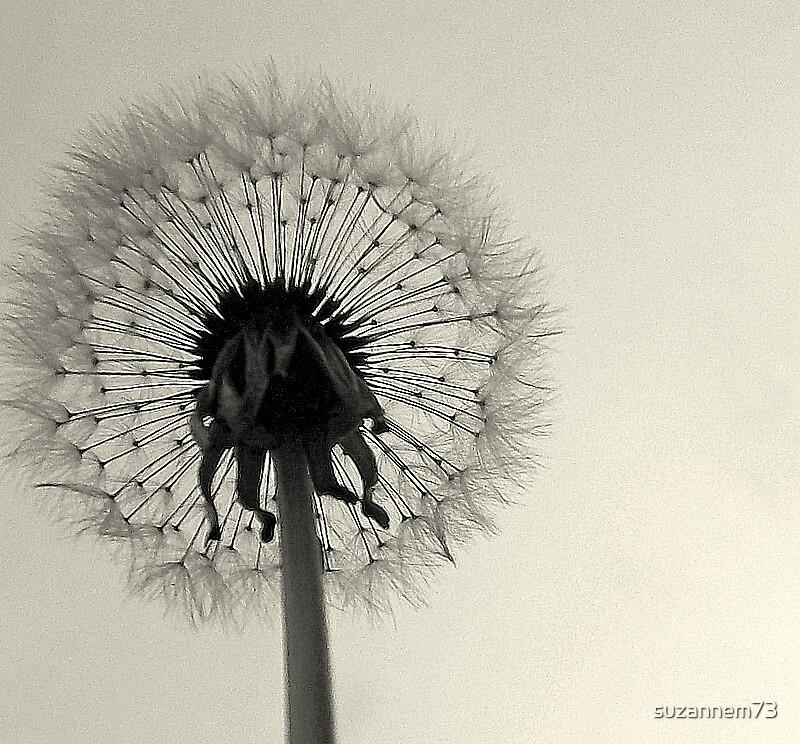 Make a Wish by suzannem73