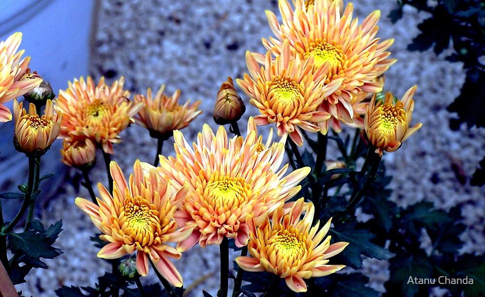 Flower - 35 by Atanu Chanda