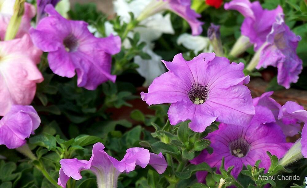 Flower - 37 by Atanu Chanda