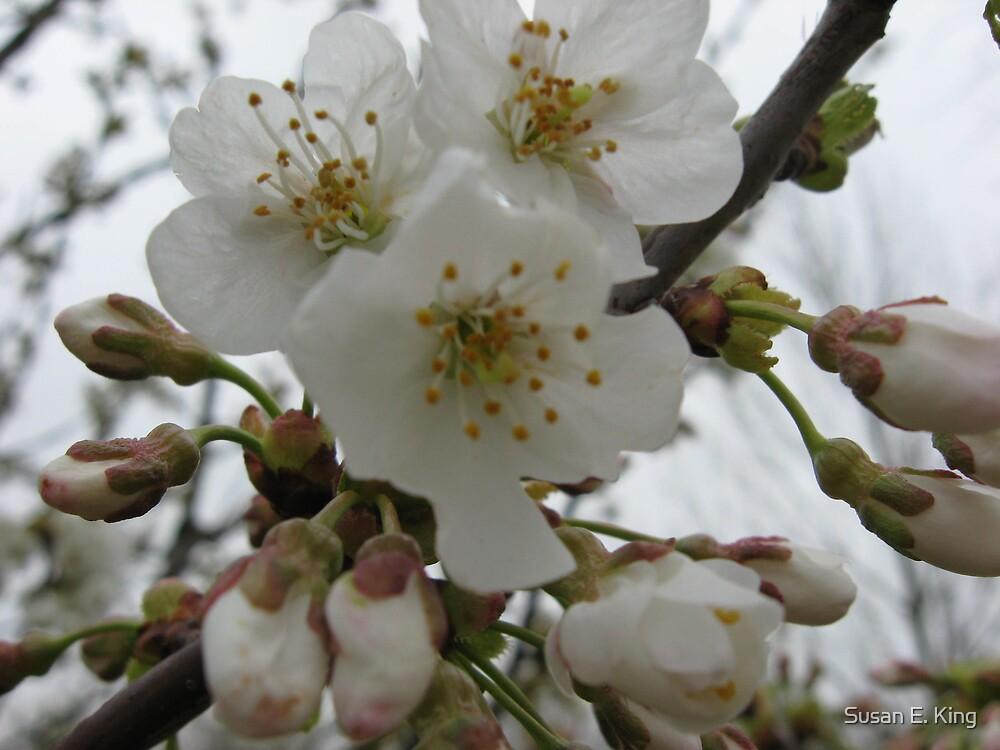 Blossom by Susan E. King