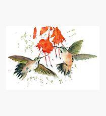Hummingbird Watercolor Photographic Print