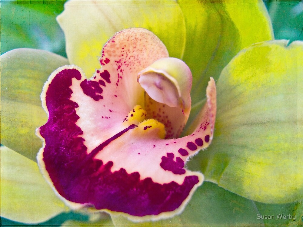 Sensuality of Love by Susan Werby