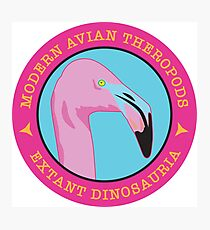 Modern Avian Theropods - Extant Dinosauria: Phoenicopterus ruber Photographic Print