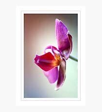 Pout Photographic Print