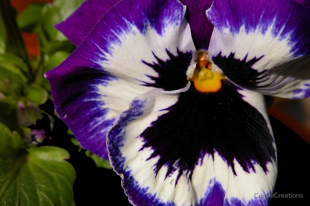 Just a pansy by CanDuCreations