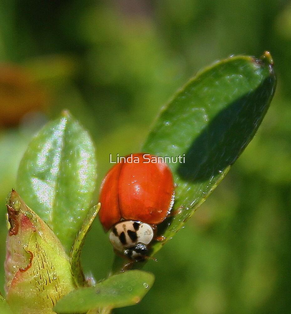 babybug by Linda Sannuti