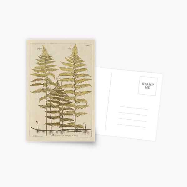 Vintage Fern Botanical Postcard