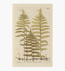 Vintage Fern Botanical Photographic Print