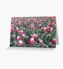 Toronto Tulips Greeting Card