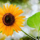 Shinny  Sunflower by LudaNayvelt