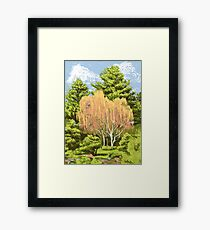 Willow Tree - Denver Botanic Gardens Framed Print