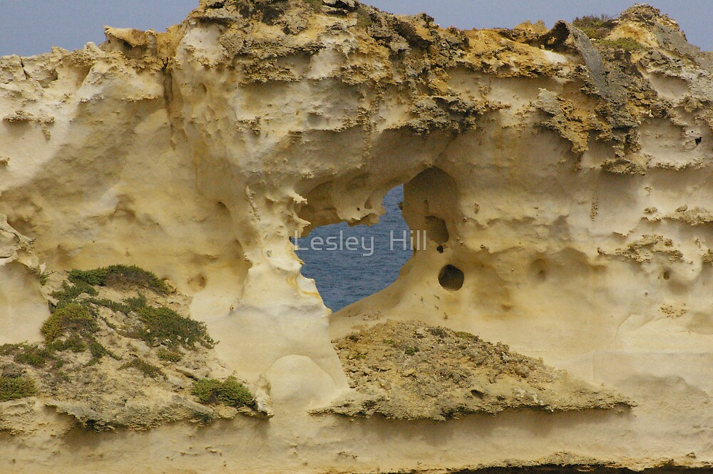 Nature's Window by Lesley  Hill