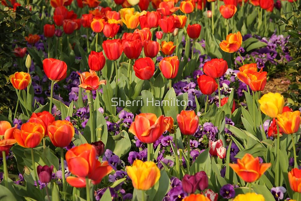 Jewel Tones of Spring by Sherri Hamilton
