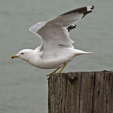 Takeoff by Idil
