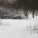 old deserted orchard by Nikolay Semyonov