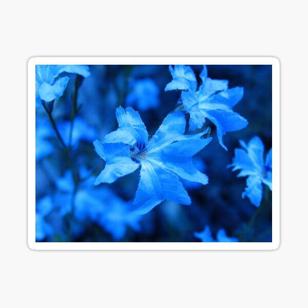 Blue Leschenaultia - 2 Sticker