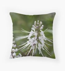 Kitty Wiskers Throw Pillow