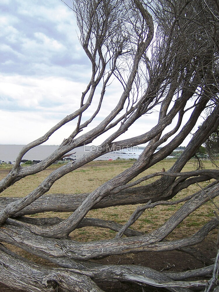 branches by Lee Martin