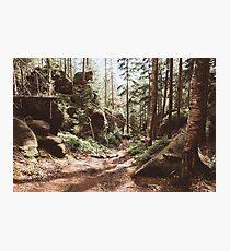 Wild summer Photographic Print