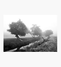 Willows in fog Photographic Print