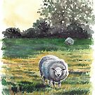 Irish Sheep by Eva C. Crawford