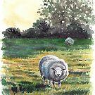 Irish Sheep by Eva Crawford