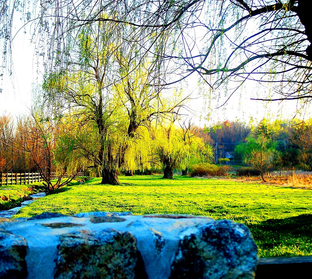 Willows by the Stream by Judi Taylor