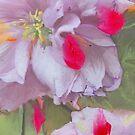 Sakura in Love by Gabriele Maurus