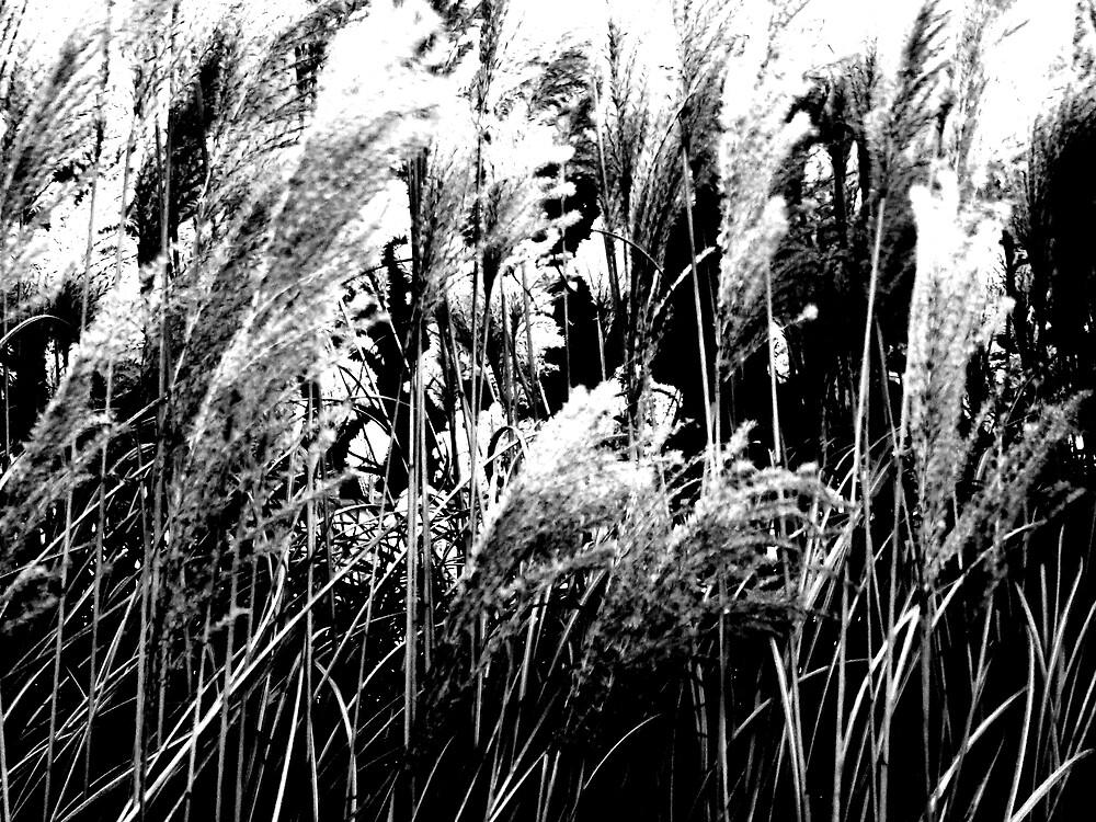 Reed Rush by Kiera