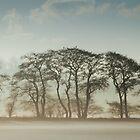 Winter Treeline by John Dunbar