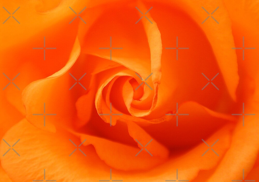 Beautiful Orange Rose by Mythos57