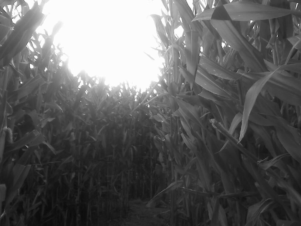corn maze by sarastu