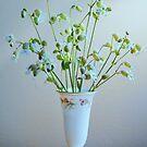 Wildflowers (bladder campion wildflower) by Laurie Minor
