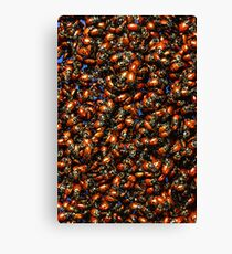 Beetle Bug Insect Fun Canvas Print