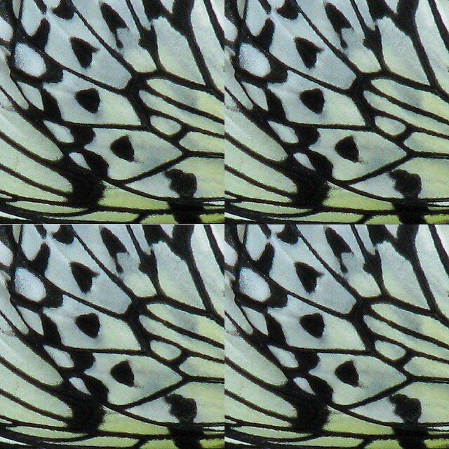 butterfly wings 2 by michaela gilt