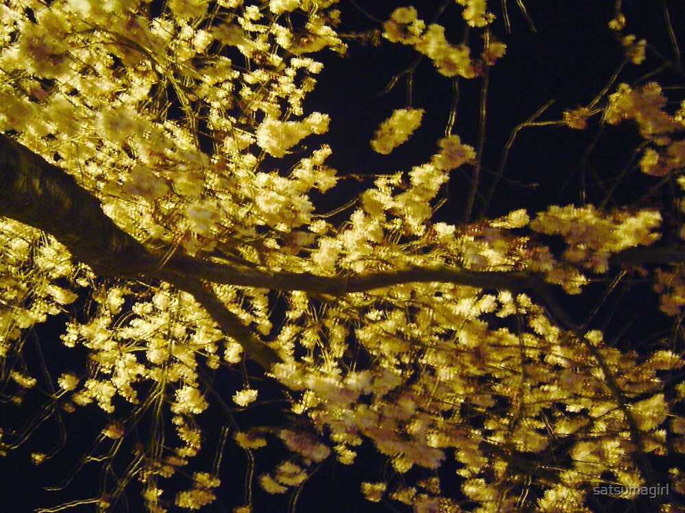 Night Blossoms 2 by satsumagirl