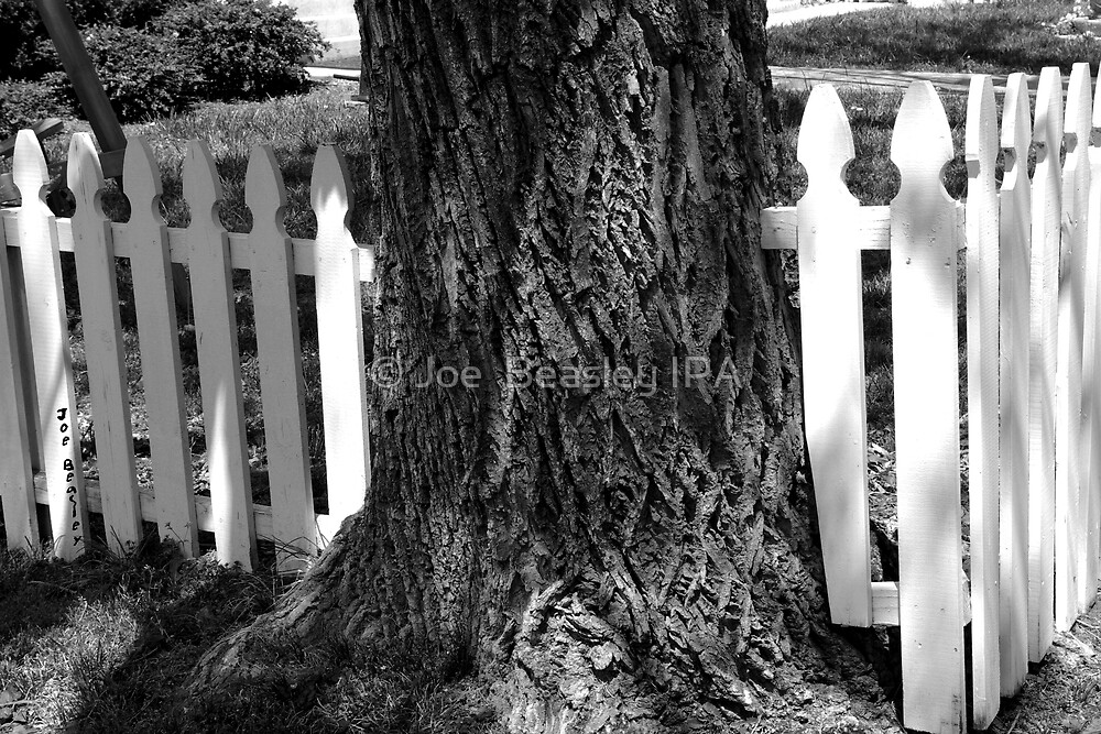 The Fence and The Tree by © Joe  Beasley IPA