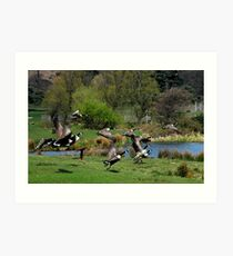 canadian geese in flight margam park red bubble meet port talbot Art Print
